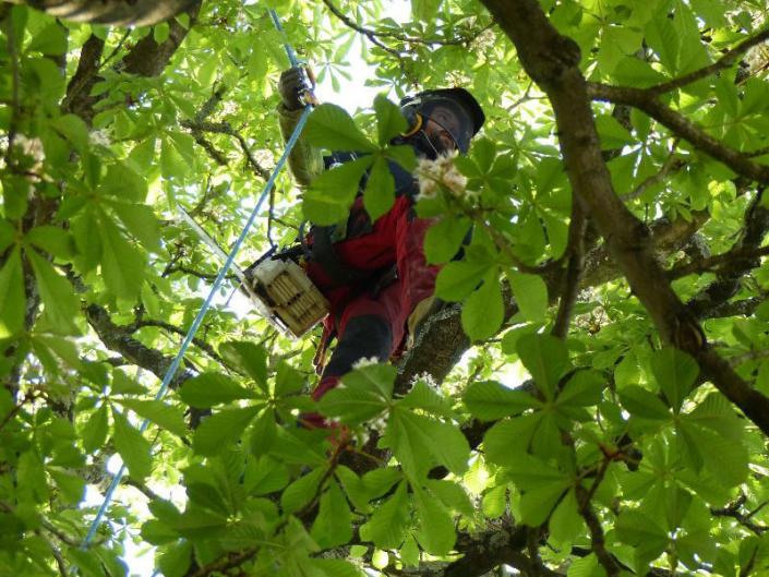 Élagage et ébranchage d'un arbre - Votre paysagiste professionnel nantais Morisseau Paysagistes (44)