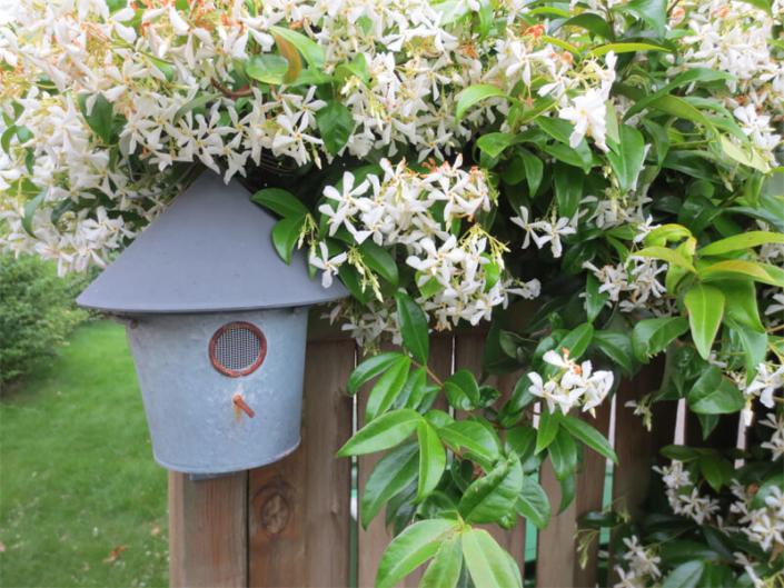 Entretien de jardin - Morisseau Paysagistes Nantes