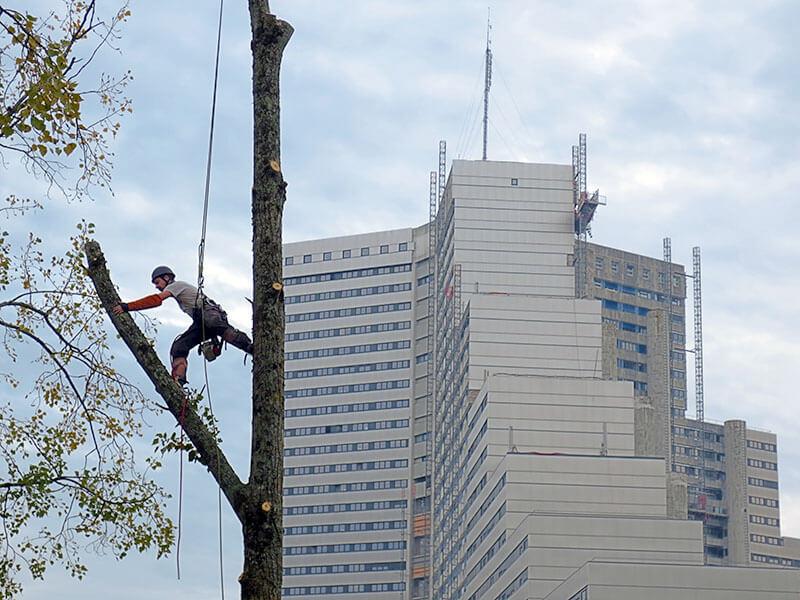 Élagage, ébranchage, taille d'arbres - Morisseau Paysagistes Nantes