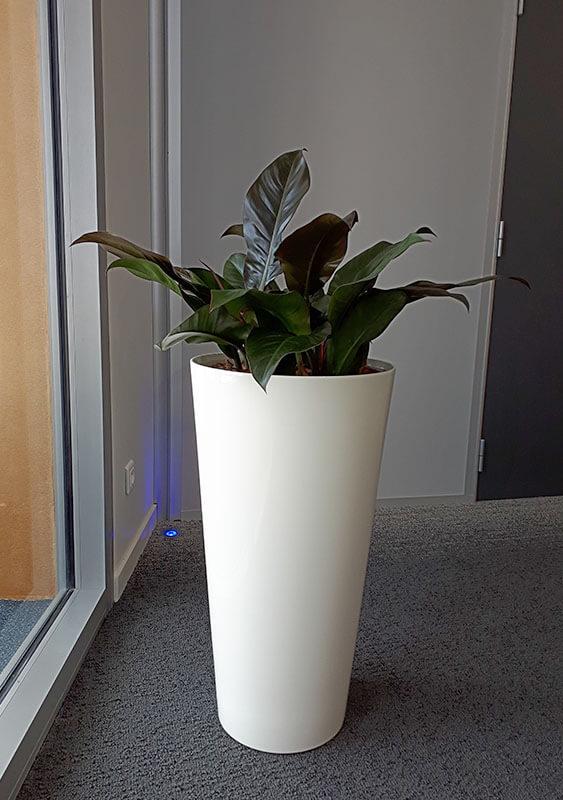 Plante en pot, décoration de bureau, jardin d'intérieur - Morisseau Paysagistes Nantes