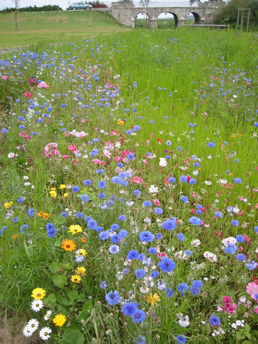 Gazon fleuri, gestion différenciée - Morisseau Paysagistes Nantes