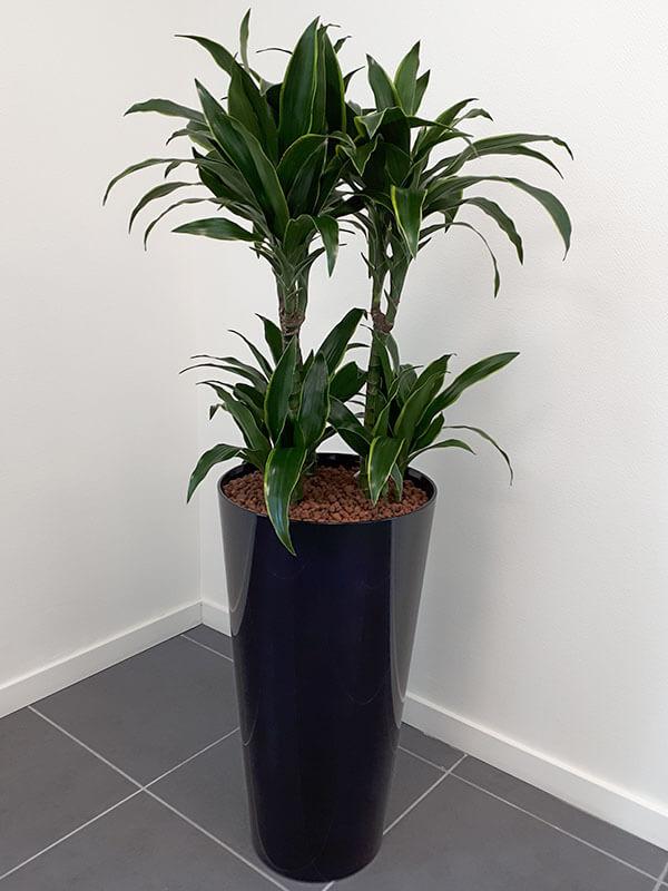 Plante en pot, décoration de bureau professionnel, jardin d'intérieur - Morisseau Paysagistes Nantes