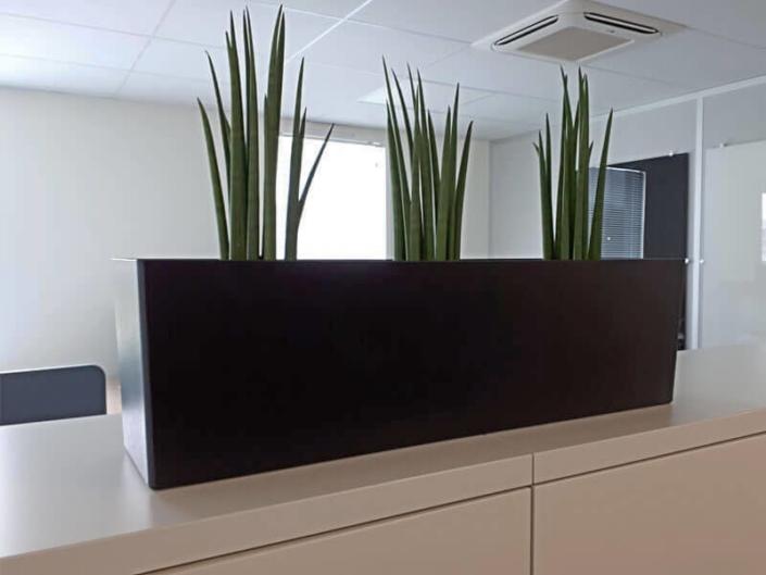 Plante en pot, décoration de bureau professionnel, séparateur d'espace, jardin d'intérieur - Votre paysagiste professionnel nantais Morisseau Paysagistes (44)